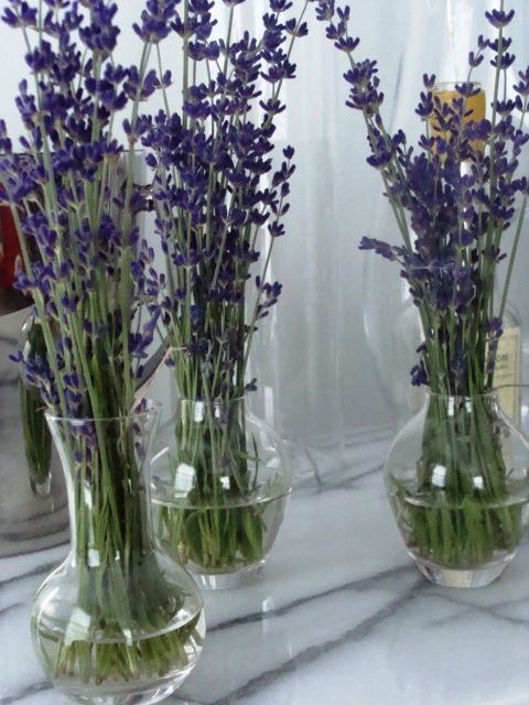 CSA_6.20.09_lavendar